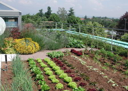 C mo dise ar un huerto ecol gico Rotaciones de cultivos ecologicos