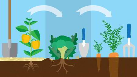 Rotaciones de cultivos dise o del huerto Rotaciones de cultivos ecologicos