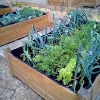 Ideas prácticas para hacer un huerto